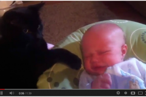 Cat Soothes Baby to Sleep [Video]